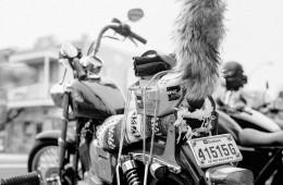 Sasquatch Ride